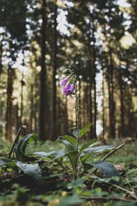 Wandern im Harz: So laufen sich 100km Harzer Hexenstieg